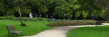 territorio quartiere 4 parchi parco verde alberi albero 380 ant